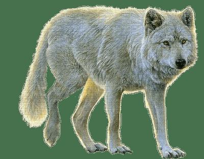 Loup Blanc **