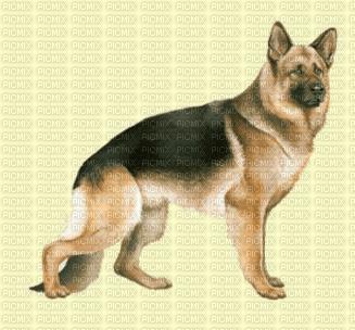 Berger allemand dogzer