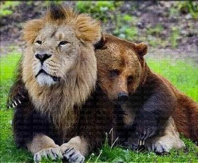 Lion et ours