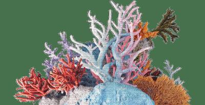reef coral bp