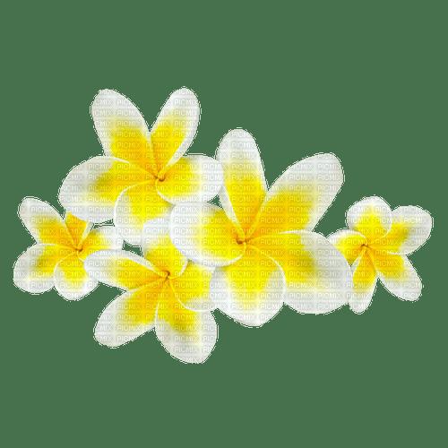 Flowers.Yellow