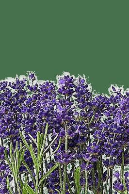 Lavande.Lilas.fleurs.flowers.Victoriabea