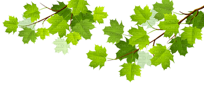 arbre feuilles tree border deco