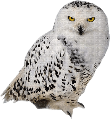 Kaz_Creations Bird Birds Owl