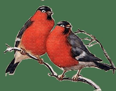Bird Winter branch_volaille hiver branche