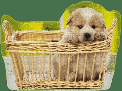 dog chien 🐶