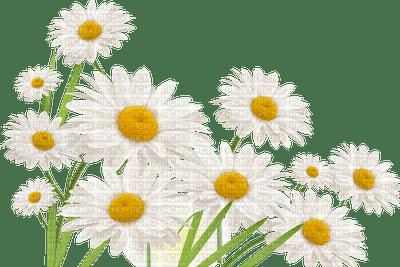 ,frame,camomilles,fleur,summer,tube, deko,scrapbooking Pelageya