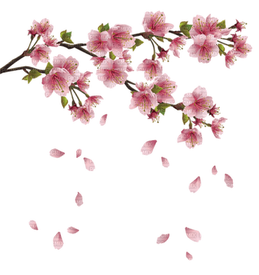 Kaz_Creations Flowers Branch Petals Spring