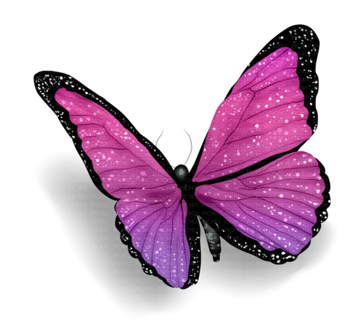 Butterfly Violet Black  - Bogusia