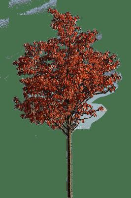 tree katrin