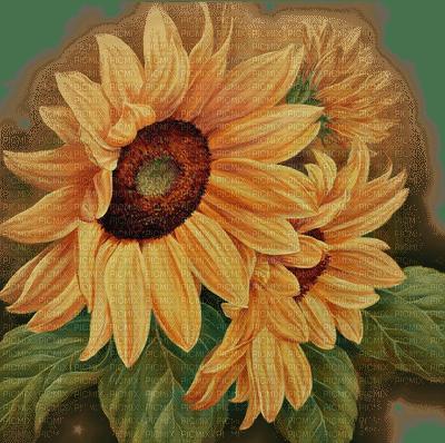 fond autumn automne sunflower