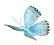 Butterflies, Butterfly, Insects, Insect, Blue - Jitter.Bug.Girl