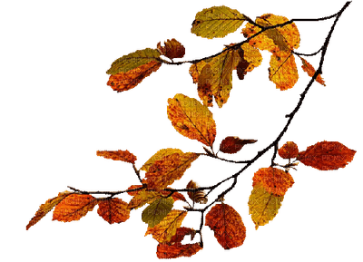 branch _ autumn_branche automne_feuille_leaves_Blue DREAM 70