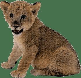 lion katrin