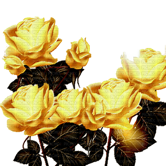 minou-yellow-flower