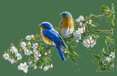spring birds branch   oiseaux printemps