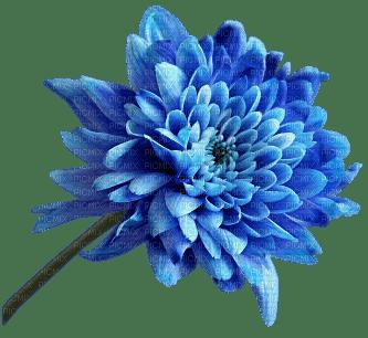 Blue DREAM 70