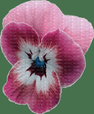 Pensée rose