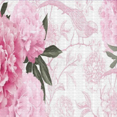 flowers peony, peonies bp