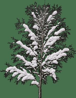 tree-plant-snow-winter-decoration