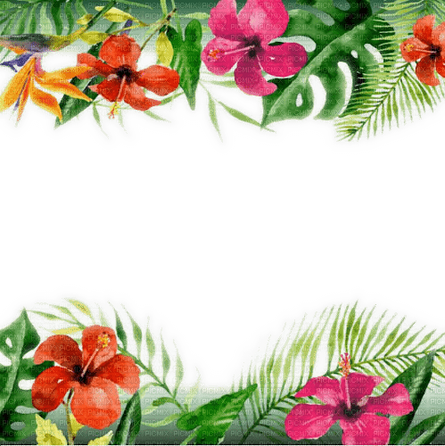 tropical flower frame cadre fleur
