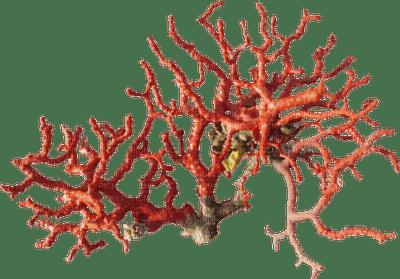 coral koralle corail underwater plant unterwasserpflanze  deco tube  summer    ete sommer  plante sous-marine sea mer meer undersea sous l'eau