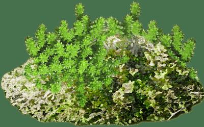 Kaz_Creations Garden Deco Grass
