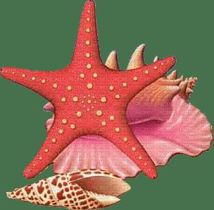 summer seastar shell deco