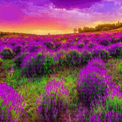 purple flower field spring bg  violet fleur paysage printemps fond