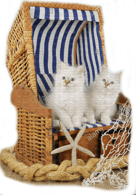 cats white summer beach chair chats blanc êtê chaise de plage