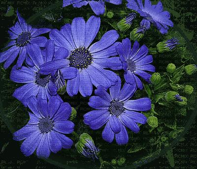 minou-blue-flower-blomma-fiore