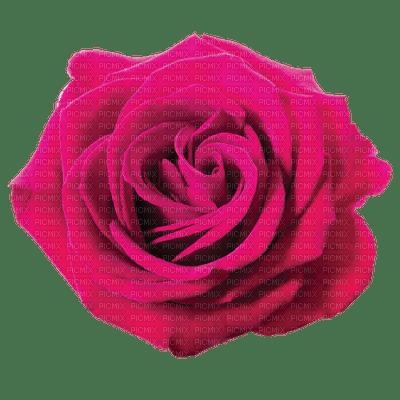 Trandafir ro