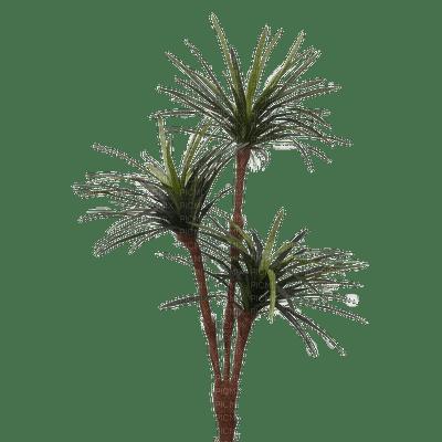 Plants.plante.Deco.Victoriabea