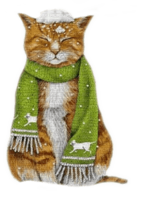 cat winter scarf chat hiver