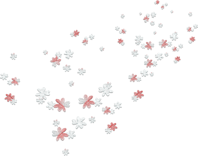 soave deco  flowers scrap white pink