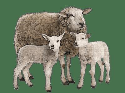 mouton GS
