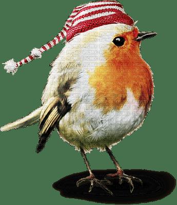 chantalmi noël hiver winter neige snow oiseau