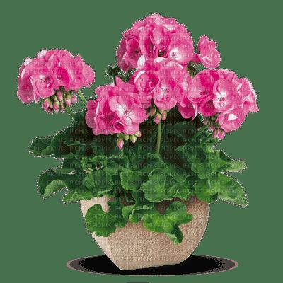 fleur Pelageya