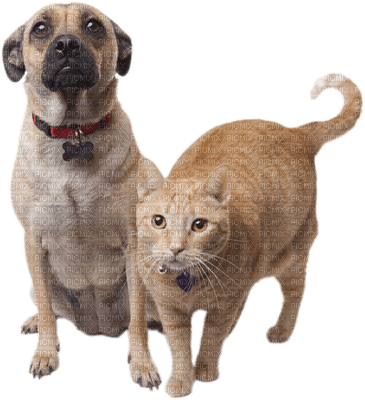 Dog and cat behaviour courses