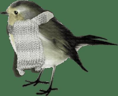 chantalmi  hiver winter neige snow noël oiseau
