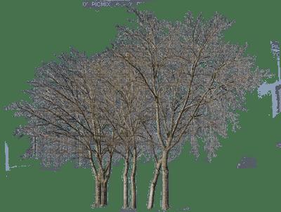 Trees.tree.arbre.Arbres.Plants.winter.hiver.Victoriabea