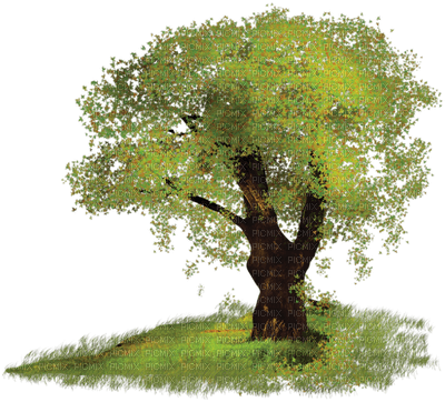 tree spring arbre printemps