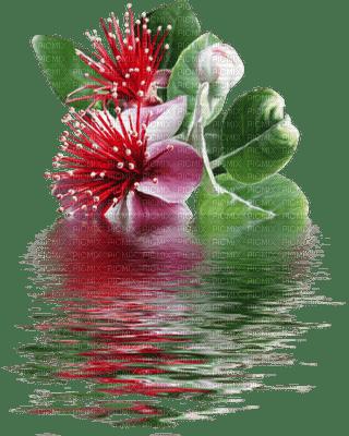 Fleur et eau