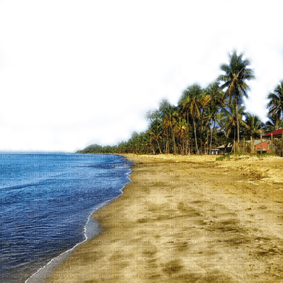 beach plage strand sand ocean water paysage landscape fond background ozean image summer ete  sommer  meer mer sea palm tree palme palm leaf  paume tube
