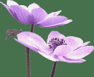 flower,fleur