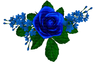 rosas azuis-l