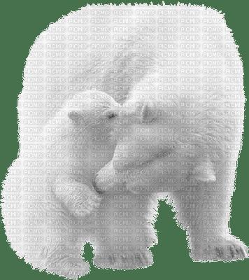 aze ours blanc White