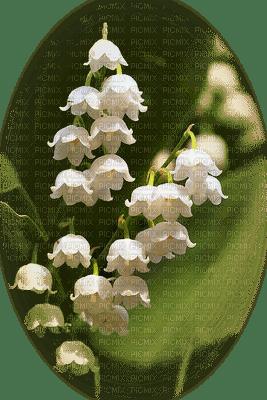 minou-flowers-Lily of the Valley-Mughetto-fiori-Muguet-fleurs-blommor-liljekonvaljer