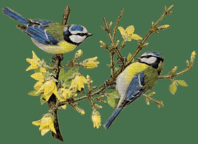 birds spring branch oiseaux printemps