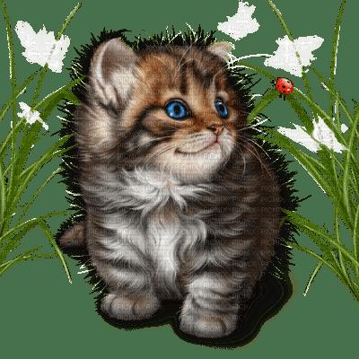 cat chat katze  spring printemps  deco  fun  summer ete  tube  sommer animal garden jardin garten grass herbe
